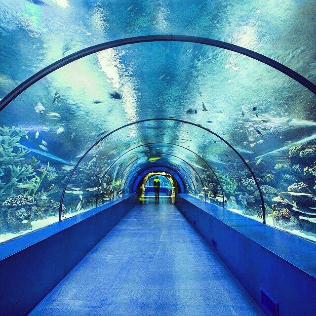 大型亚克力水族馆隧道