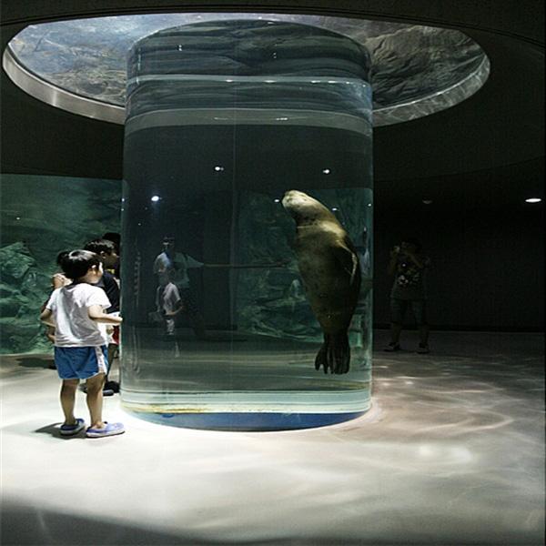 海洋世界的海狮亚克力缸