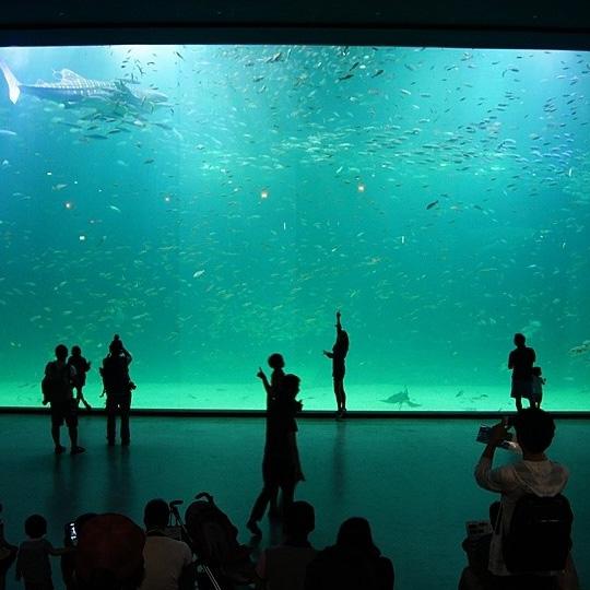 海洋世界鲨鱼亚克力鱼缸